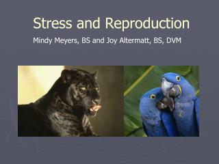 Stress and Reproduction Mindy Meyers, BS  and Joy Altermatt,  BS, DVM