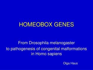HOMEOBOX GENES