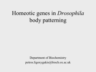 Homeotic genes in  Drosophila  body patterning