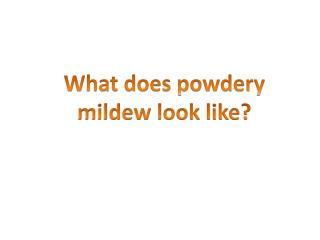 What does powdery mildew look like?