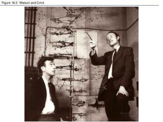 Figure 16.0  Watson and Crick