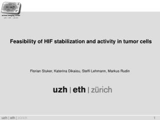 Feasibility of HIF stabilization and activity in tumor cells
