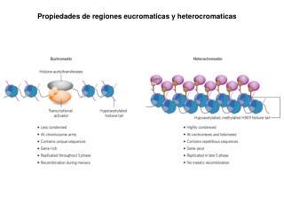 Propiedades de regiones eucromaticas y heterocromaticas