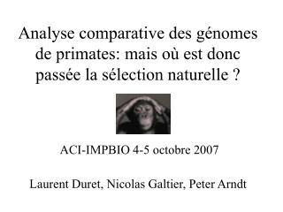 Analyse comparative des génomes de primates: mais où est donc passée la sélection naturelle ?