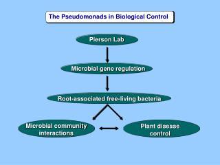 Pierson Lab