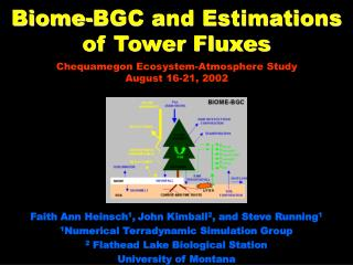 Biome-BGC and Estimations of Tower Fluxes