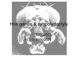 Hox genes  &  synpolydactyly