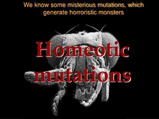 Homeotic mutations