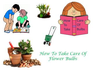 How To Take Care Of Flower Bulbs