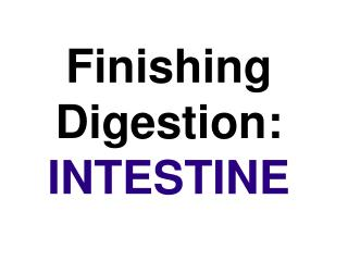 Finishing Digestion:  INTESTINE