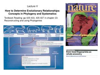 Lecture V How to Determine Evolutionary Relationships: Concepts in Phylogeny and Systematics