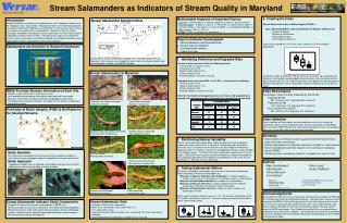 Stream Salamanders as Indicators of Stream Quality in Maryland