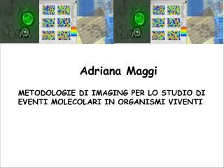 Adriana Maggi