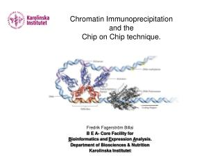 Chromatin Immunoprecipitation  and the Chip on Chip technique.