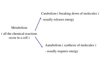 Metabolism ( all the chemical reactions occur in a cell )