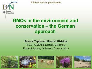 GMOs in the environment and conservation – the German approach