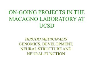 ON-GOING PROJECTS IN THE MACAGNO LABORATORY AT UCSD