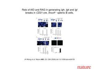 JH Wang et al. Nature 460 ,  231 - 236  (2009) doi:10.1038/nature08 159