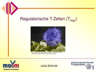 Regulatorische T-Zellen (T regs )