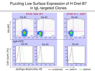 Puzzling Low Surface Expression of H-DreI-B7 in IgL-targeted Clones