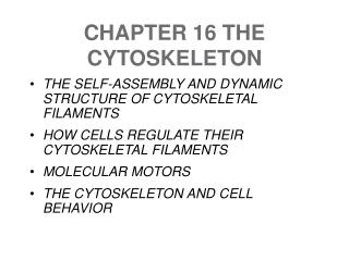CHAPTER 16 THE CYTOSKELETON