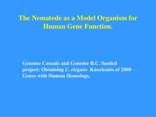 The Nematode as a Model Organism for Human Gene Function.