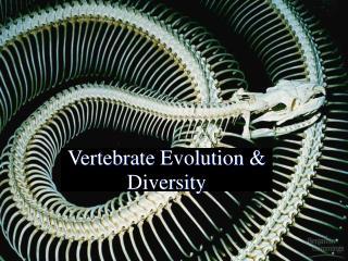 Vertebrate Evolution  Diversity