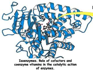 Isoenzymes. R ole of cofactors and coenzyme vitamins in the catalytic action of enzymes.