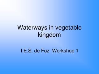 Waterways in vegetable kingdom