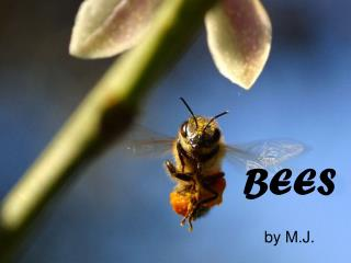 BEES by M.J.