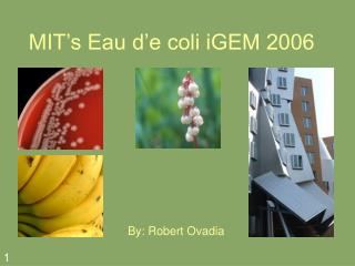 MIT's Eau d'e coli iGEM 2006
