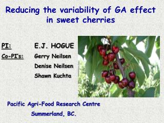 Reducing the variability of GA effect in sweet cherries