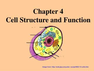 Chapter 4 Cell Structure and Function