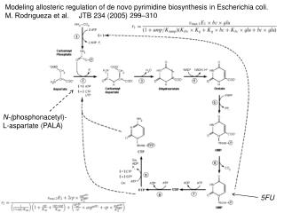 Modeling allosteric regulation of de novo pyrimidine biosynthesis in Escherichia coli.