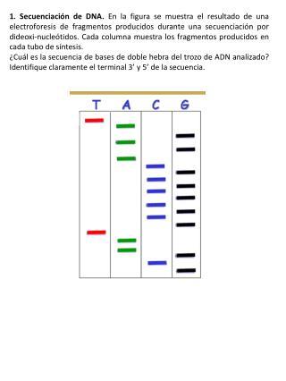 2. DNA  fingerprinting .  Las figuras corresponden a dos tests de paternidad.
