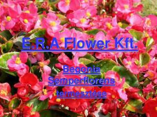 E.R.A Flower Kft.