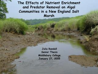 The Effects of Nutrient Enrichment and Predator Removal on Algal Communities in a New England Salt Marsh