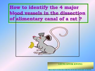 How to identify the 4 major blood vessels in the dissection of alimentary canal of a rat ?