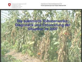 Die bakterielle Tomatenwelke:  Diagnostik und Entwicklung der Situation im 2007