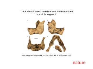 MG Leakey  et al.  Nature 488 ,  201 - 204  (2012) doi:10.1038/nature 11322