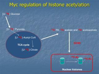 Myc regulation of histone acetylation
