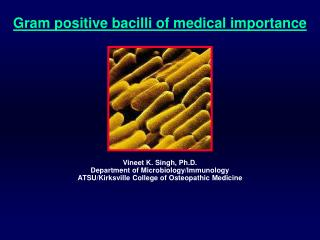 Gram positive bacilli of medical importance