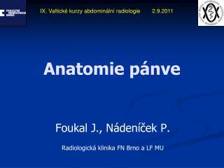 Anatomie pánve
