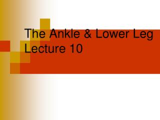 The Ankle & Lower Leg Lecture 10