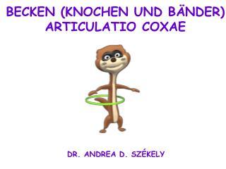 BECKEN (KNOCHEN UND BÄNDER) ARTICULATIO COXAE
