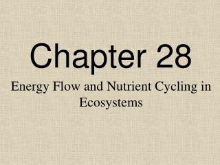 Chapter 9: Terrestrial Nutrient Cycling