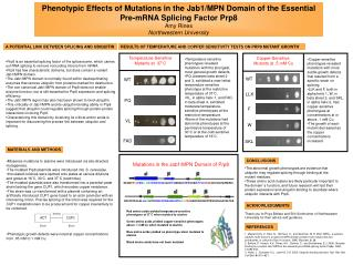 Phenotypic Effects of Mutations in the Jab1/MPN Domain of the Essential