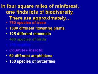 In four square miles of rainforest, one finds lots of biodiversity.  There are approximately