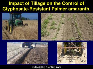 Impact of Tillage on the Control of Glyphosate-Resistant Palmer amaranth.