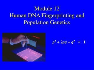 Module 12 Human DNA Fingerprinting and Population Genetics